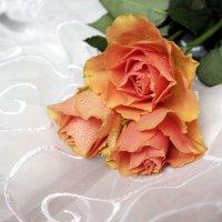 Розы :: Юлия Тулаева