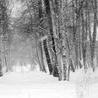 Ветер + снег = метель :: Елена Перевозникова