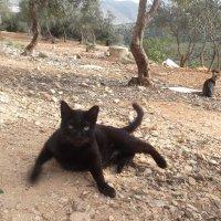 страшнее кошки зверя нет :: irena uriavichus