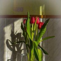 Тюльпаны к празднику :: Андрей Дворников