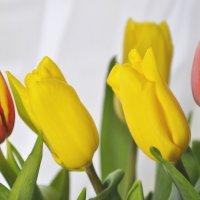Тюльпаны :: Дима Кислицин