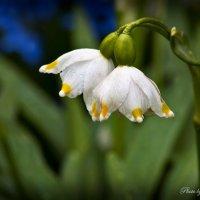 Всем женщинам дарю цветы и поздравляю с 8 Марта! :: Евгений Лимонтов