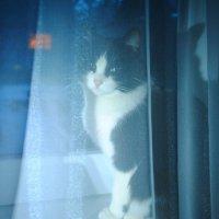 Моя кошка :: Дарья Лихтар
