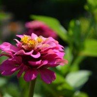 Flower :: Diana Maiba