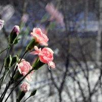 Приход весны :: Игорь Николаев