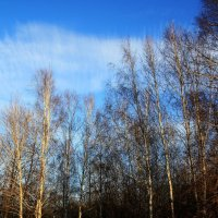 Сияющие  облака.. :: Валерия  Полещикова