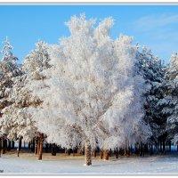 Зимняя краса :: Виктор Новоженин
