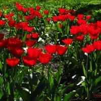 Весна идёт.. :: Антонина Гугаева