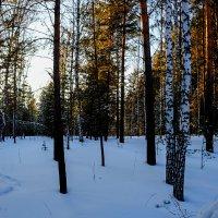 В зимнем лесу :: Sergey Kuznetcov