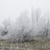 Вот и встретились зима с весной :: Ксения Довгопол