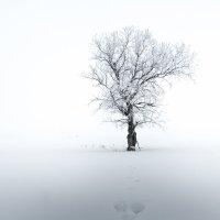 Вяз... :: Константин Филякин