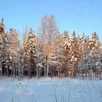 В снежном убранстве :: Ольга
