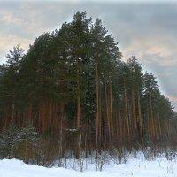 лесной угол :: Сергей Цветков