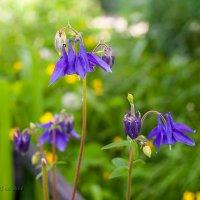 Цветы :: Андрей Нагайцев