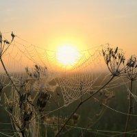 Новый день лучится светом нежным. :: Павлова Татьяна Павлова