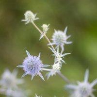 Цветы :: Юля Тихонова