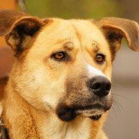 Собака-друг человека. :: Natalia Adams