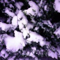 Снег :: Мария Кальченко-Буланова