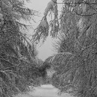 Сквозь зиму :: Михаил Лобов (drakonmick)