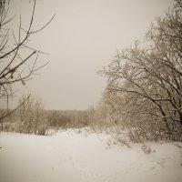 Зима, в лесу, к вечеру... :: Аทลﮎłล ﮎÌА