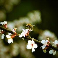 Пчёлы :: Марина Кириллова