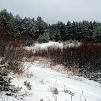Зимы последняя метель... :: Лесо-Вед (Баранов)