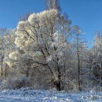 Зимний лес :: Valeriy Piterskiy