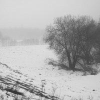 Туманные дни в конце февраля (2) :: Юрий Бондер