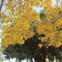 И в январе желтеют листья :: Герович Лилия