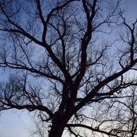 Дерево. :: Oleg4618 Шутченко