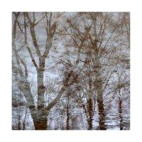 деревья-08 :: наташа савельева