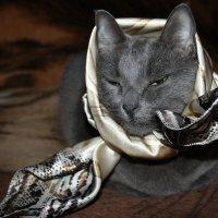 Обожает  платочки...  шарфики....)) :: Валерия  Полещикова