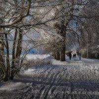 Прогулка в парке :: Михаил Александров
