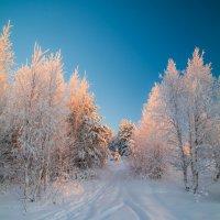 новогодний лес :: mitro72 цимбал