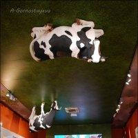 Коровы в магазине. :: Anna Gornostayeva