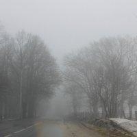 А я еду, а я еду за туманом.... :: Tatiana Markova