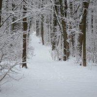 Наша мягкая красивая зима. :: *MIRA* **