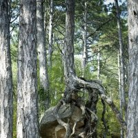 сидит такое в лесу :) :: Алеся Болдырева