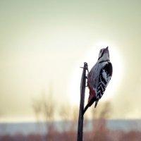 Гордая птица... :: Константин Филякин