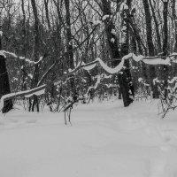 Гирлянда из снега :: Юрий Стародубцев