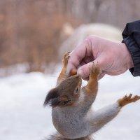 Орех не отдашь , руку сломаю!!! :: Alex Bush