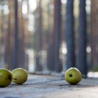 Забытые в лесу. :: Лазарева Оксана