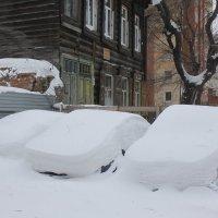 На зимовку :: Savayr