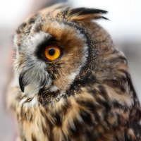 Молчалива эта птица, а слух для музыки годится... :: Ирина Данилова