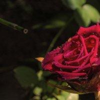 флейта для королевы :: Александр