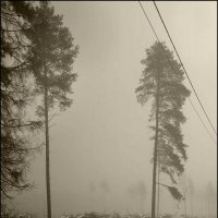 Туманое фото :: antip49 antipof