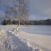Зима. :: Vladimir