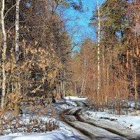 Забыты снежные ненастья... :: Лесо-Вед (Баранов)