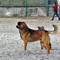 пляжные стражи :: Александр Корчемный