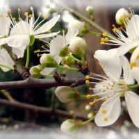Сегодня...ещё зима,весна завтра :: СветЛана D